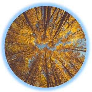 Collective Consciousness Portal